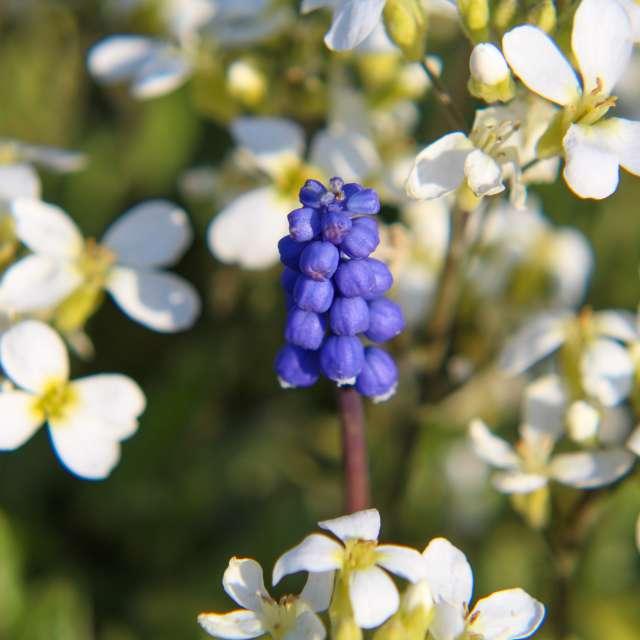 Blüte in Blüten