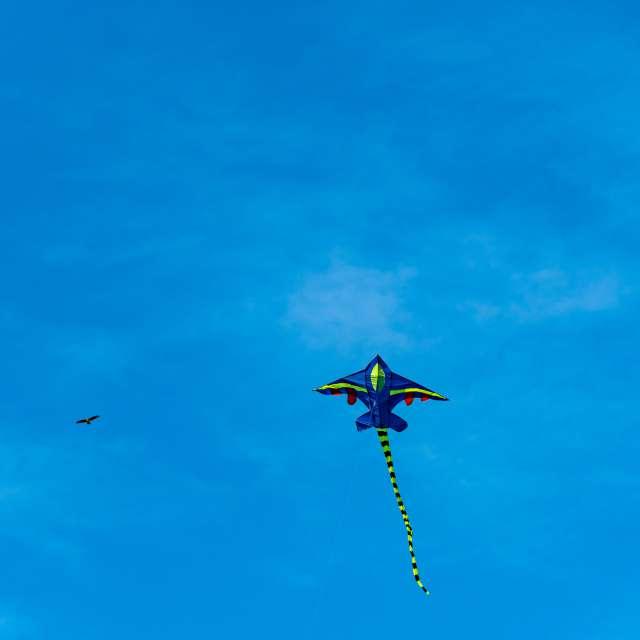 Kite and eagle