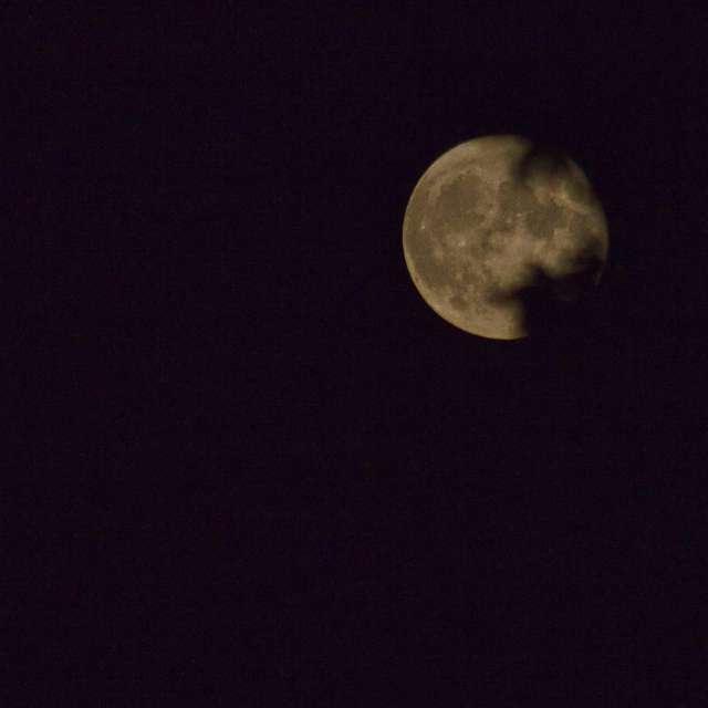 Moon near full behind leaves