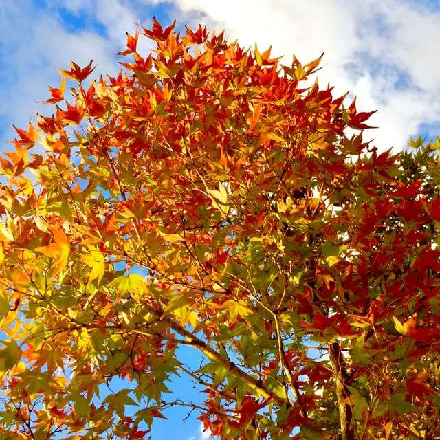 爽秋の紅葉