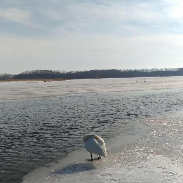 alone/Lake Tohfutsu, Hokkaido