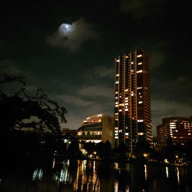 不忍池からの夜景