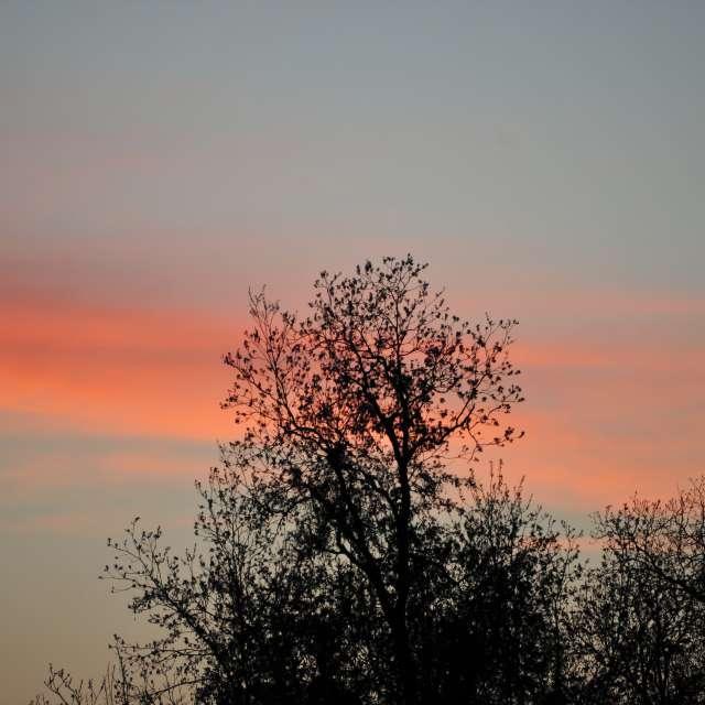 Orange Afterglow