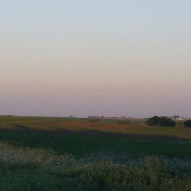 Corn fields of Iowa