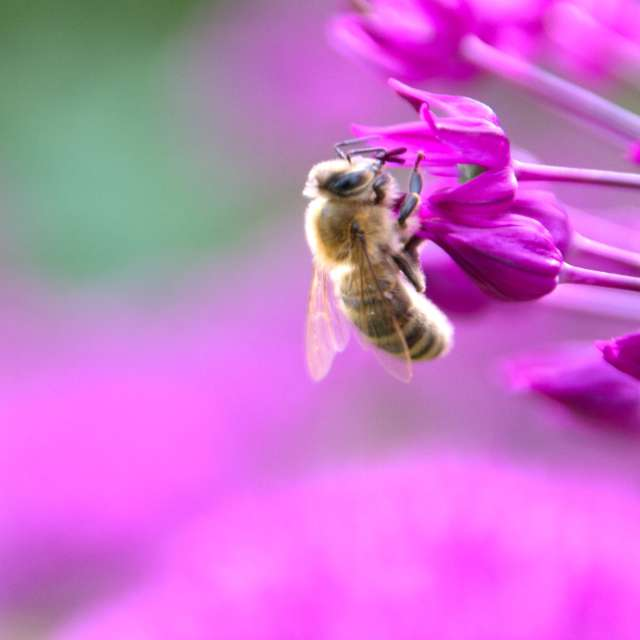 Busy bee pink flower blossom