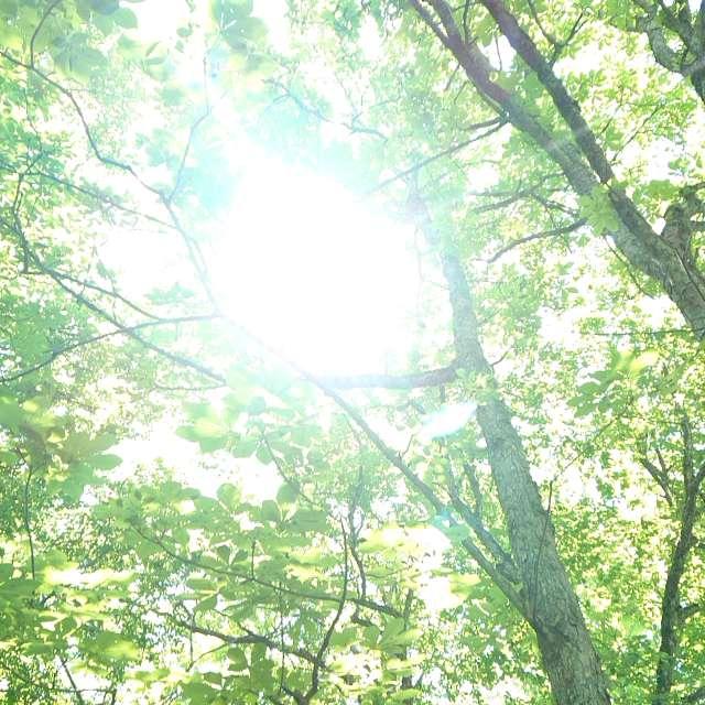 初夏の日差し