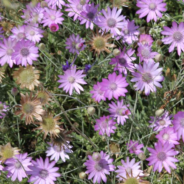 сиреневые цветы на фоне зелени