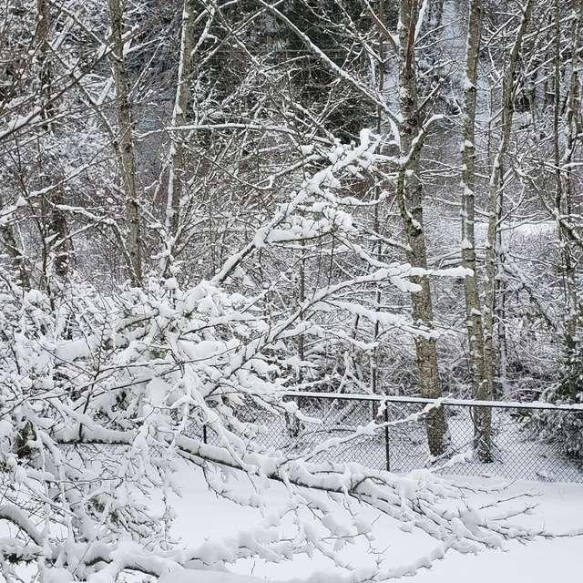 Snowfall in Gresham, Oregon