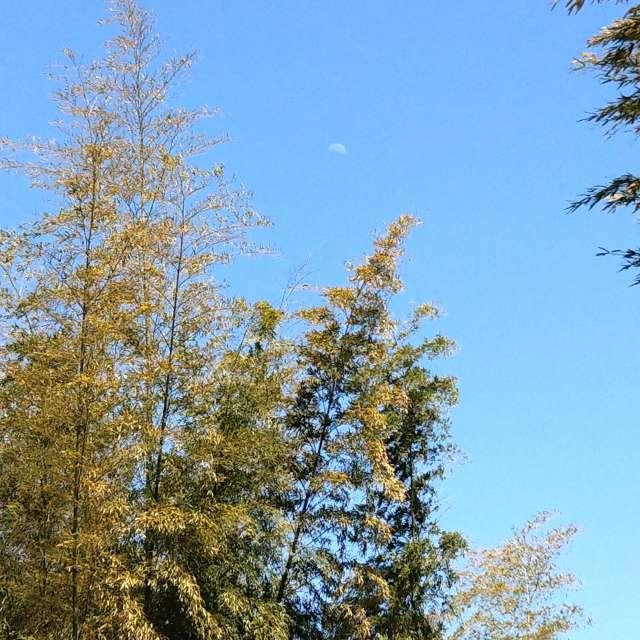 Sti🐤# 竹が生茂る彼方に 八夜月