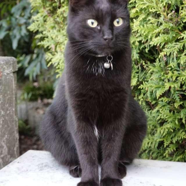 Black Cat in Germany