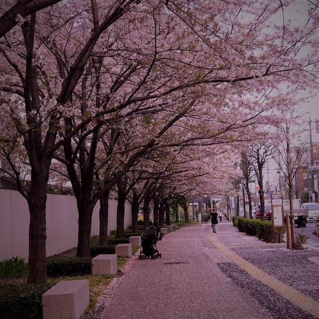 少し桜も散りばめた頃
