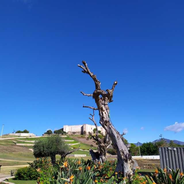 Castillo sohail