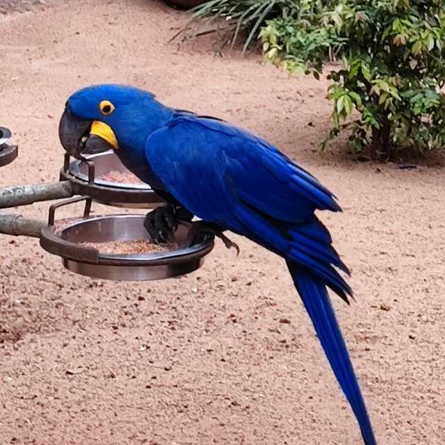 Foz Iguaçu, parque das aves