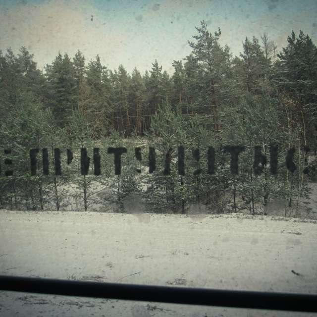 Опушка леса из окна поезда