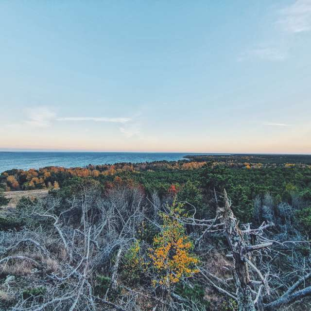 Cooronian spit