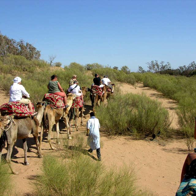 Trip on camels near Agadir
