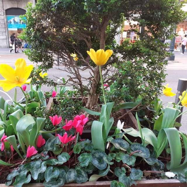 Maceta de flores de cuidad