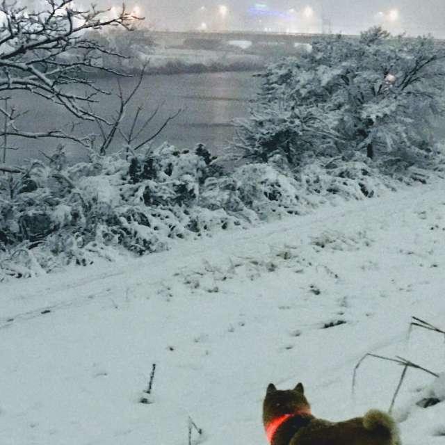 うれしい雪