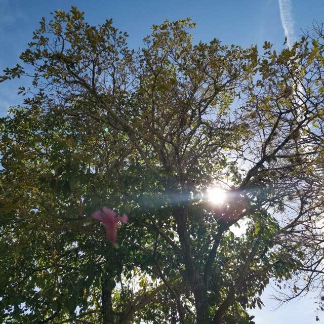 風で落ちてくる花と木と