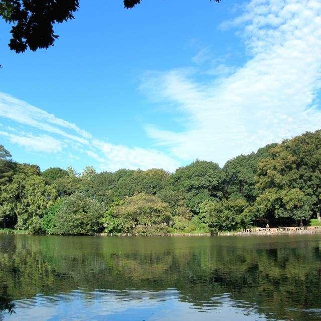 善福寺公園の上の池にて