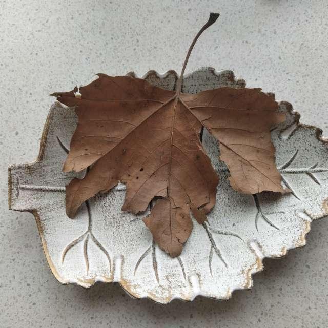 Сухо листо на поставка