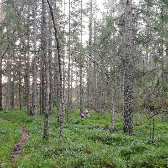 ノルウェーの森の苔にダイブして遊ぶ子ども