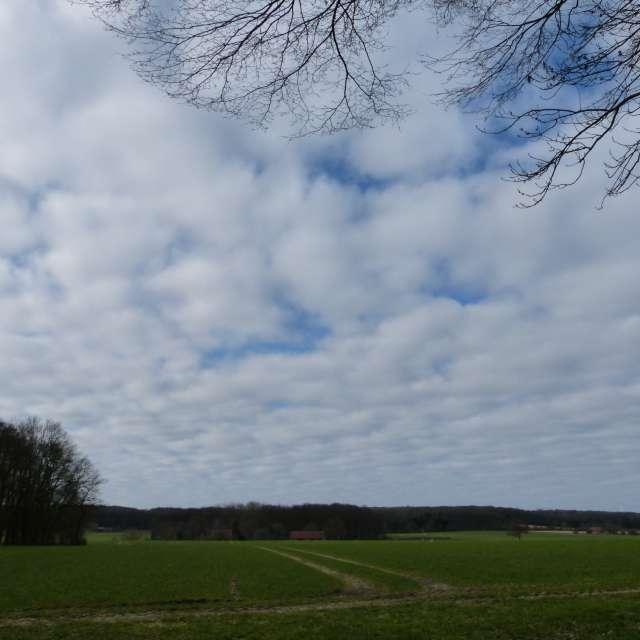 Schäfchenwolken im Frühling