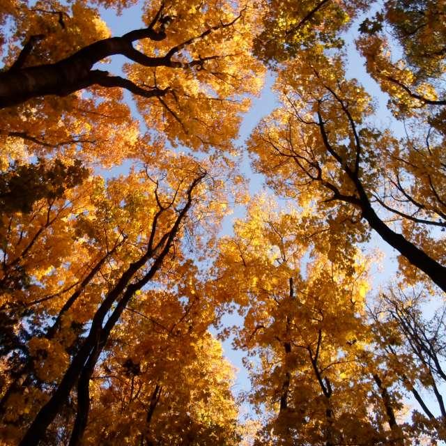 Осенний лес на фоне неба