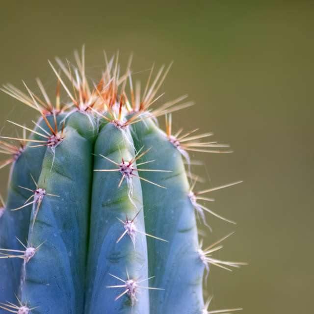 Spiky cactus with long thorns