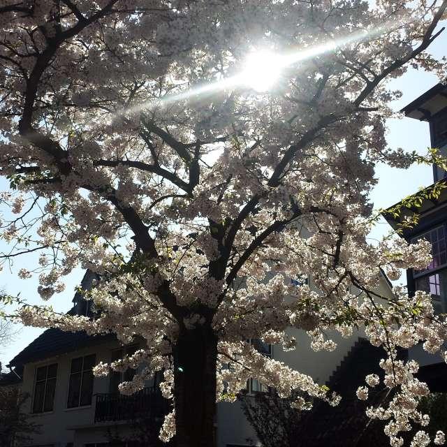Spring sun in Haarlem