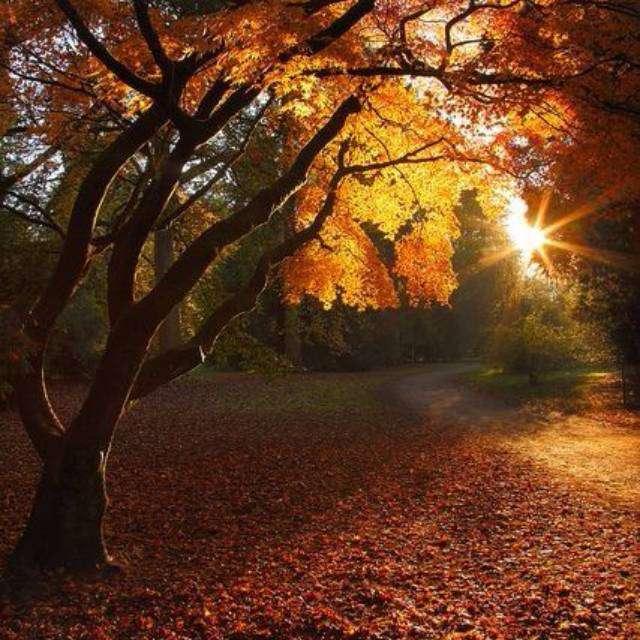 Coucher De Soleil Vraiment Magnifique