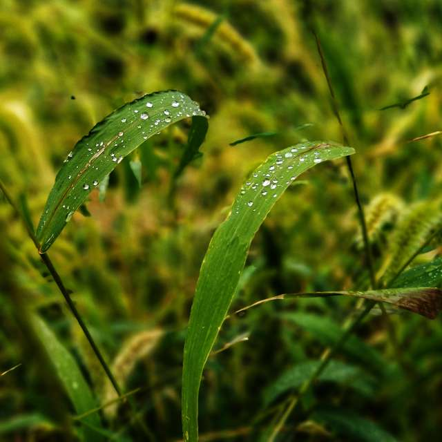 after rain on grass