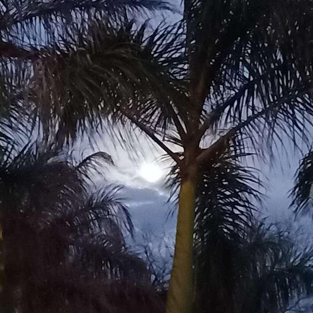 Luna y palmeras 2