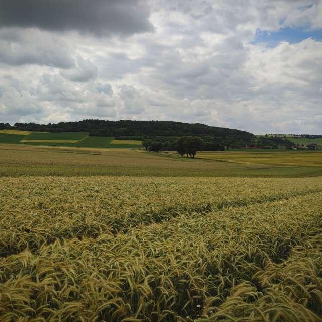 Field & Blackforest in Germany