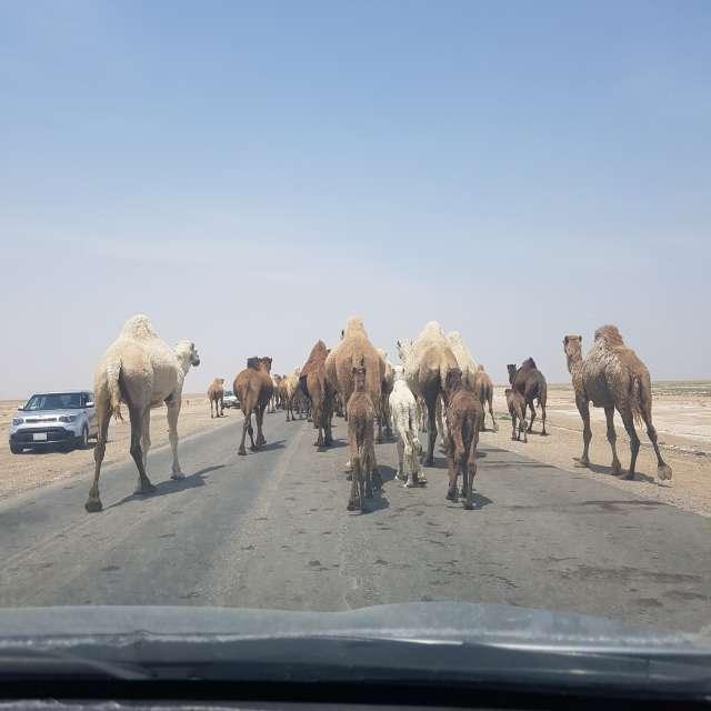 طريق كوت بدرة واسط  الشويجة