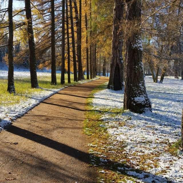 Царское село. Первый снег.