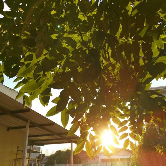 木の葉漏れ日