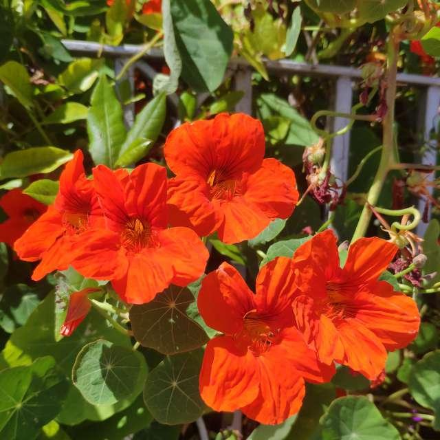 Summer flowers (I)