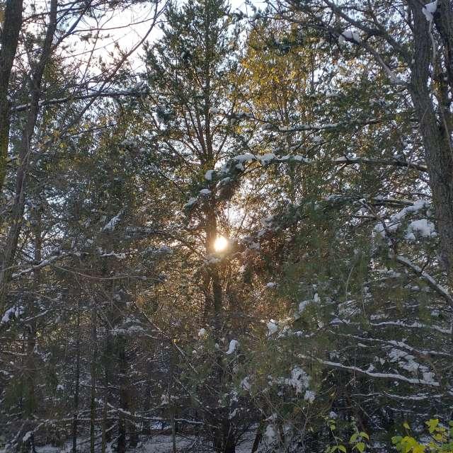 Northern October Sun