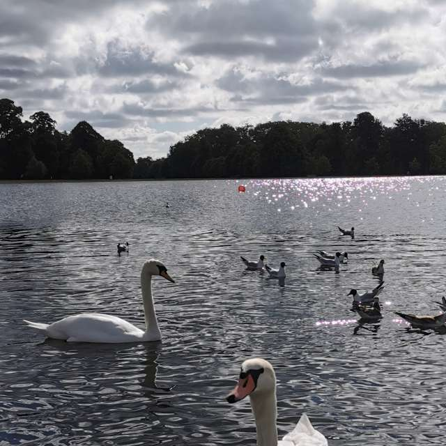Hyde Park, the round pond.