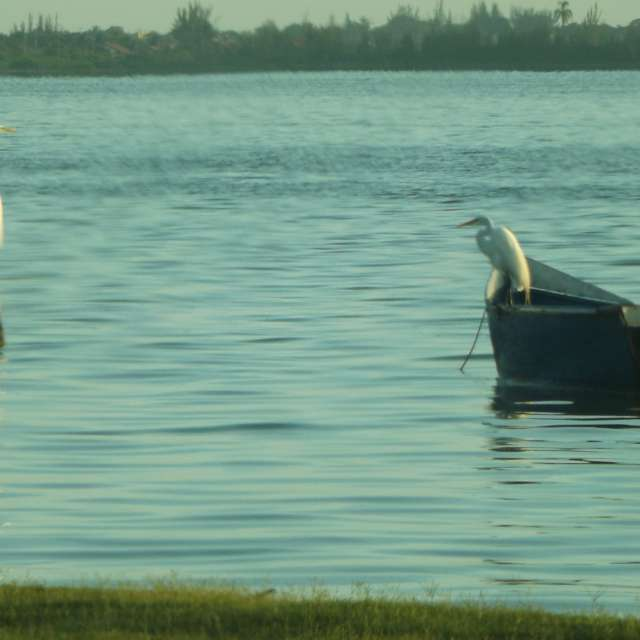 Descanso na Lagoa