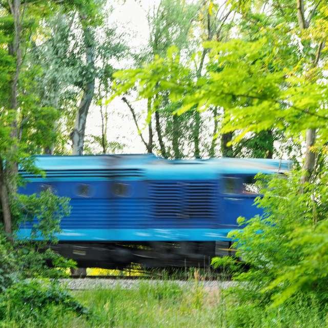 Vlak projíždějící lesem