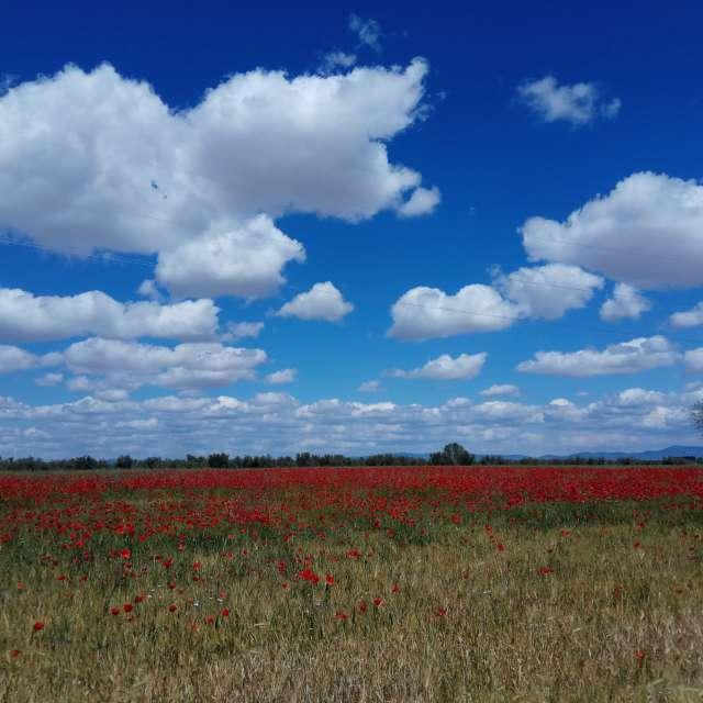 Nubes sobre amapolas