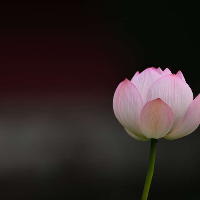 A pertty flower!