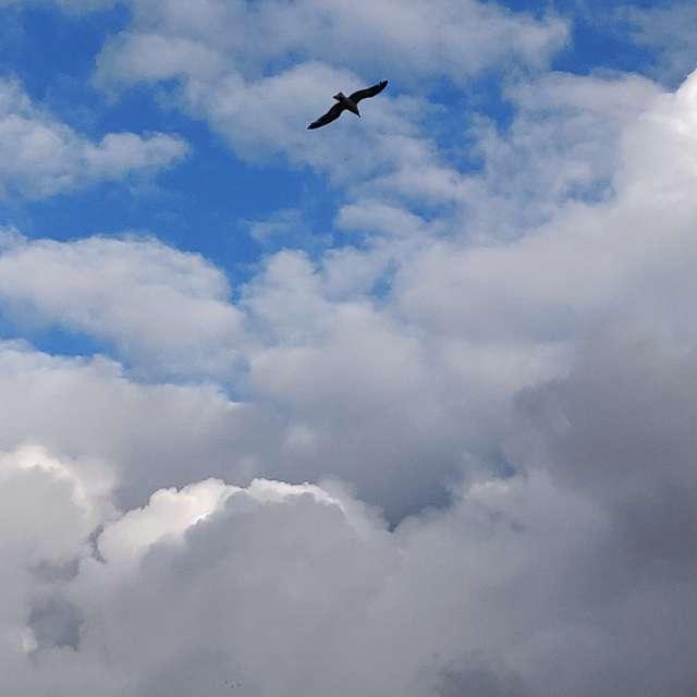Sorteando nubes con cielo gris