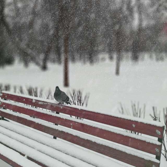 Одинокий голубь в парке