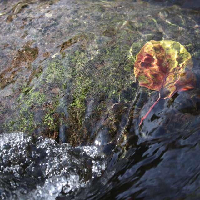 渓流の底の秋