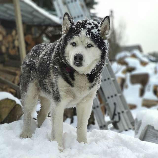 Dog, winter landscape