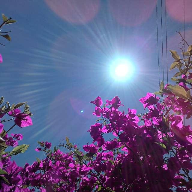 Sun... flowers