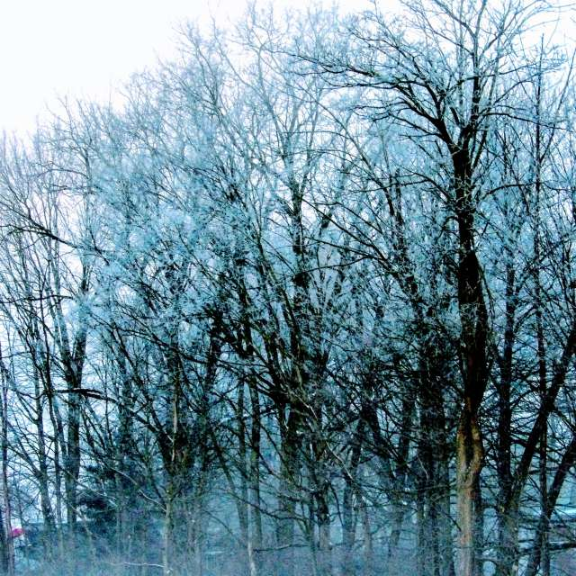 Fog Frozen on Trees